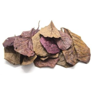 Indian Almond Leaves - 5 pack (catappa)