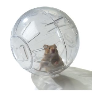 HAMSTER EXERCISE BALL 170mm