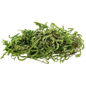 Magic Earch Water Green Moss (Sphangnum Moss) 2L