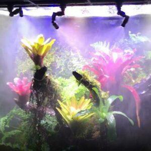 Vivarium Rain Forest Rainmaker