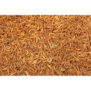 Dried Mealworms 100g