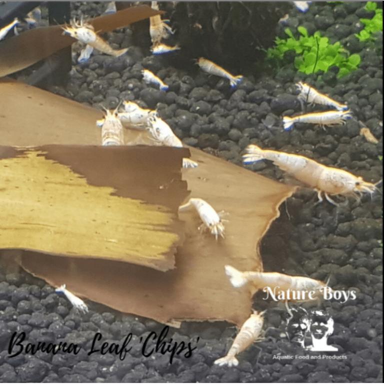 banana leaf chips shrimp Nature Boys Rebel Pets