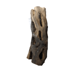 cholla wood Rebel Pets